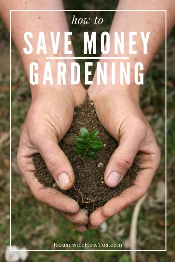 Cómo ahorrar dinero en jardinería: cultivar más por menos verde