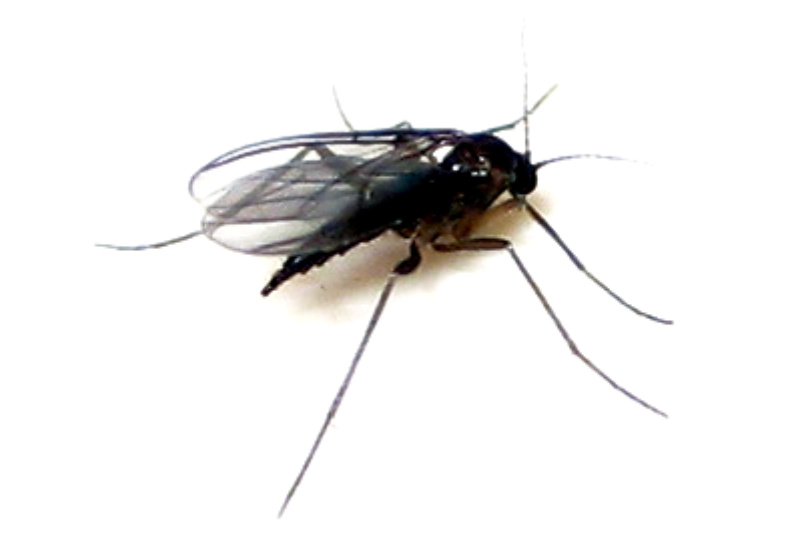 Mosquito en la casa