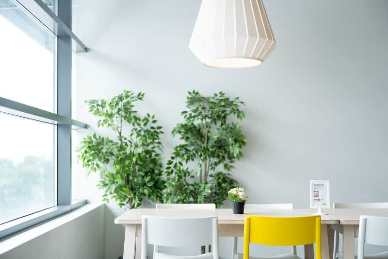 Comedor con planta alta y sillas multicolores.
