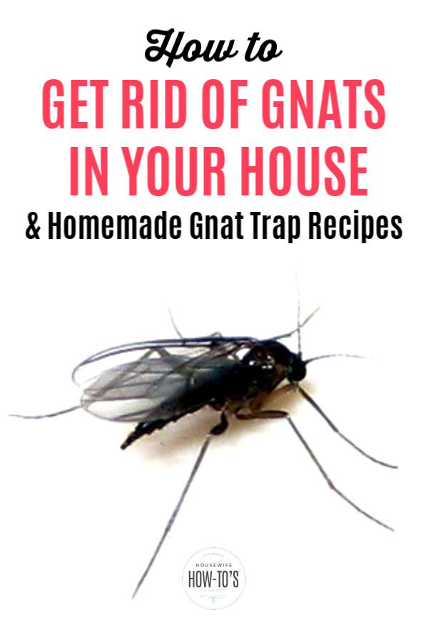 Cómo deshacerse de los mosquitos en su casa y las trampas para mosquitos caseras