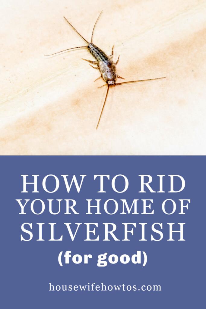 Cómo deshacerse de los peces plateados de su hogar para siempre