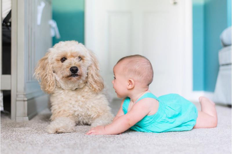 Lindo bebé y perro uno al lado del otro en un piso