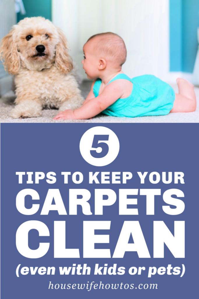 5 consejos para mantener sus alfombras limpias incluso si tiene niños o mascotas