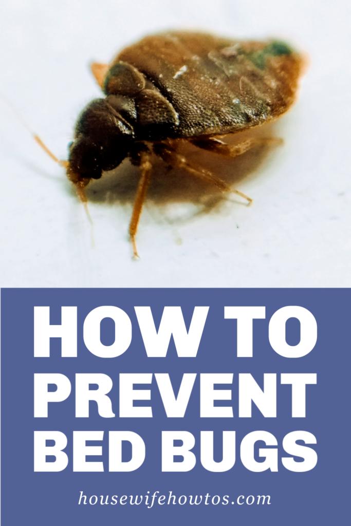Cómo prevenir las chinches