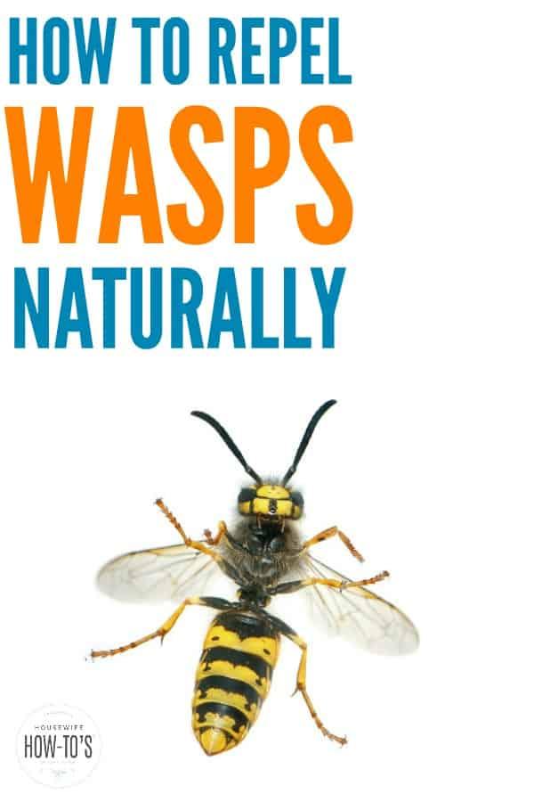 Cómo repeler las avispas de forma natural: no permita que las avispas arruinen sus picnics o barbacoas. Estos consejos los mantendrán alejados de sus espacios al aire libre. # avispas #insectos #al aire libre #naturalpestcontrol