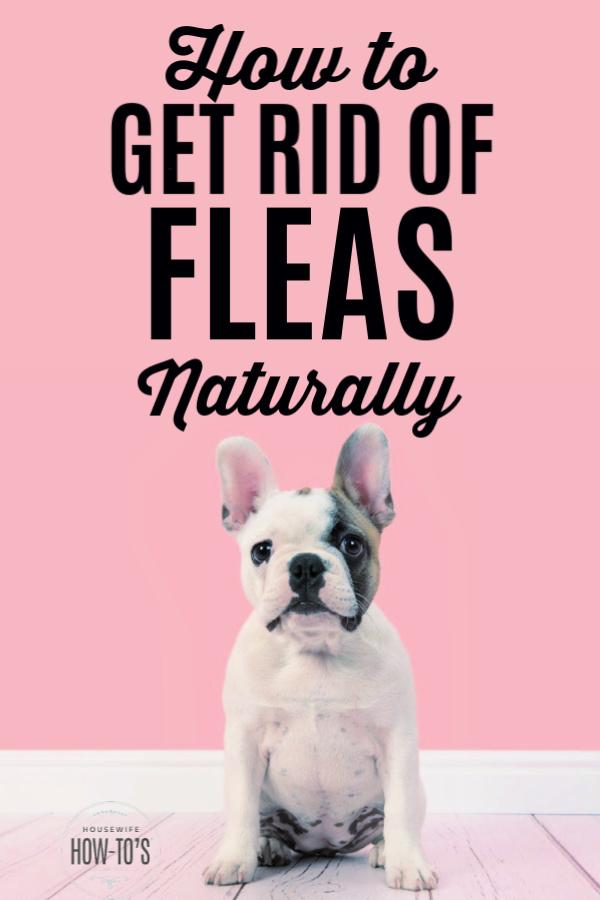 Cómo deshacerse de las pulgas naturalmente