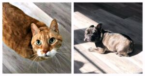 Limpiar Manchas de Mascotas en Suelos Laminados