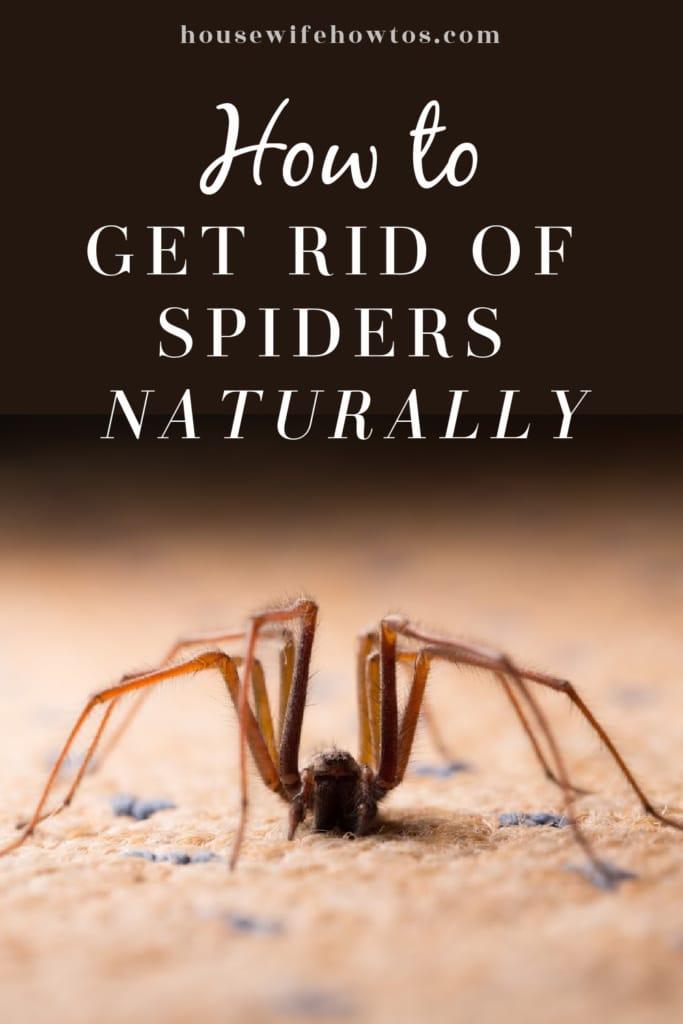 Cómo deshacerse de las arañas naturalmente