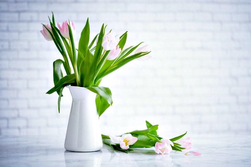 Cómo desodorizar su hogar de forma natural: tulipanes en una jarra de leche sobre una encimera