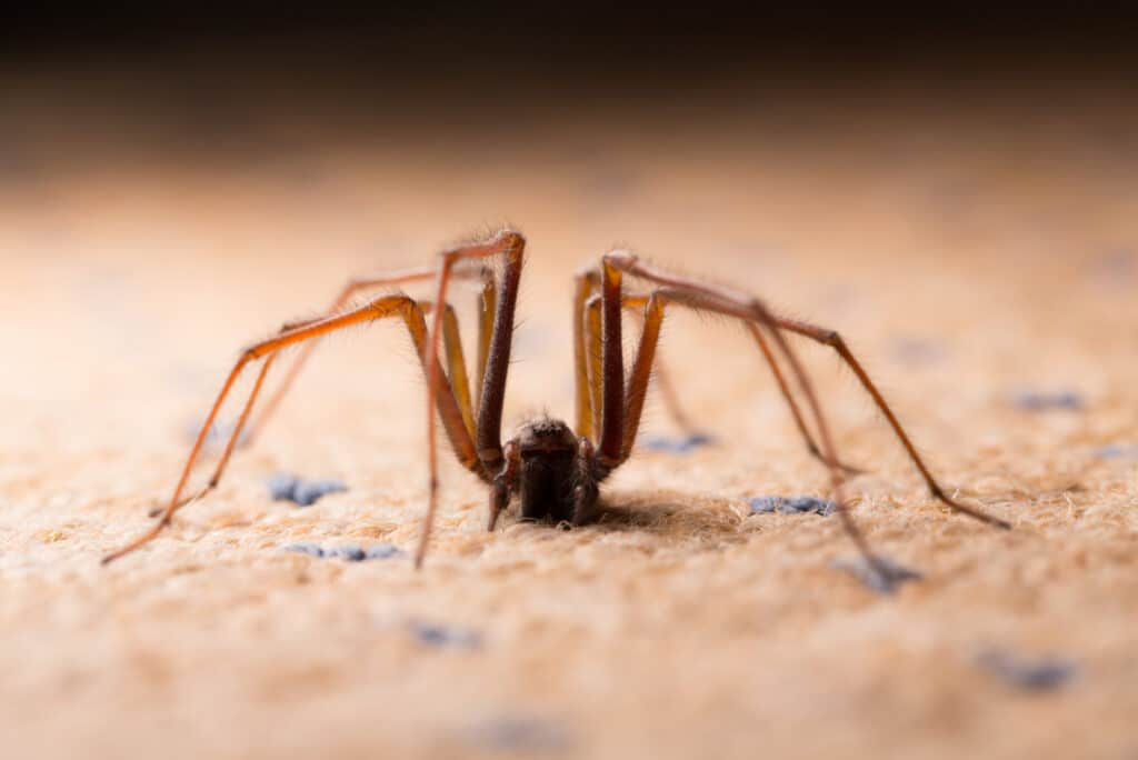 Deshacerse de las arañas naturalmente