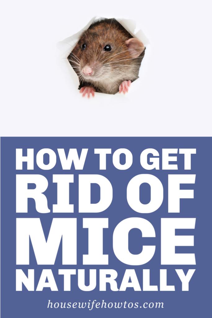 Cómo deshacerse de los ratones naturalmente