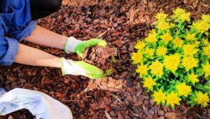 conseguir mantillo gratis para su jardín